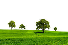 Green nature ecology Royalty Free Stock Image