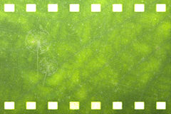 Green nature film strip (Dandelion). Green nature film strip  for adv or others purpose use (Dandelion Royalty Free Stock Photo