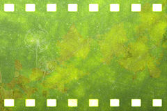Green nature film strip (Dandelion) Royalty Free Stock Photography