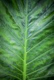 Green nature foliage pattern Stock Image