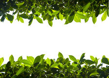 Green nature foliage up and down border Royalty Free Stock Image