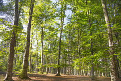 Green nature forest, oxygen full natural landscaped forest with Stock Image