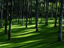 Green, Nature, Grass, Lawn Royalty Free Stock Image