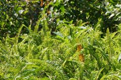 Green. Nature green growing detail hidden stock images