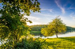 Green nature landscape of forest and river. Neris, Lithuania stock photo