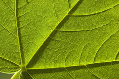 Green nature leaf Stock Photography