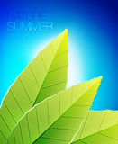 Green nature leaf background Stock Photo