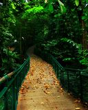 Green, Nature, Leaf, Path royalty free stock photos