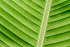 Free Green Nature Leaf Texture In Details As Natural Background Or Wa Stock Photo - 94756730
