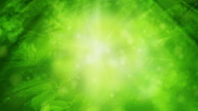 Green Nature. Looping background animation of green leaves and light