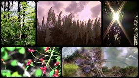 Green nature, montage stock video footage