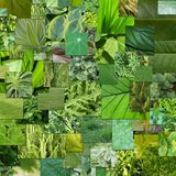 Green Nature royalty free stock photography