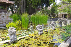 Green Nature in Nusa Dua ,Bali Royalty Free Stock Photos