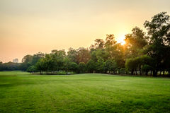 Free Green Nature On Public Park Royalty Free Stock Image - 54841506