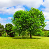 Green nature place Royalty Free Stock Photography