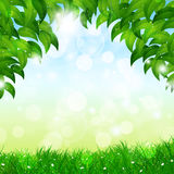 Green Nature Spring Background Stock Image