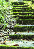 THE GREEN NATURE STEPS OF STAIR Royalty Free Stock Images