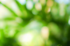 Selective green nature leaf with sunlight bokeh background.Vintage color tone style. stock images