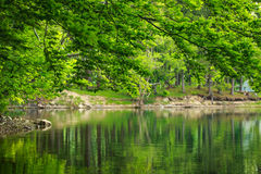 Green nature, tree branches over lake in reflection of water. Green nature background, tree branches over a lake in the reflection of water Royalty Free Stock Photo