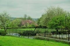 Green, Nature, Tree, Grass stock image