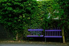 Green, Nature, Tree, Vegetation royalty free stock images