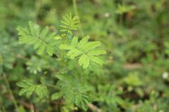 Green nature tropical fresh leaves in forest . Green nature tropical fresh leaves in forest stock photo