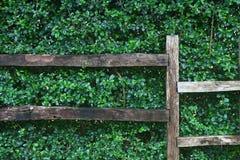 green of nature wall Royalty Free Stock Photos