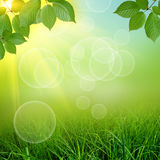 Green natute background Royalty Free Stock Photo