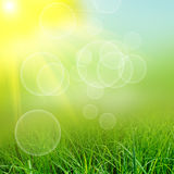 Green natute background Stock Photo