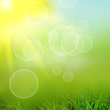 Green natute background Royalty Free Stock Image