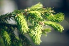Green needles stock photo