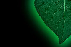 Green neon leaf. On the black background. Macro Stock Photography