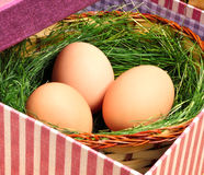 Green nest with eggs in the basket Stock Photography