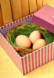 Green nest with eggs in the gift box Stock Photos