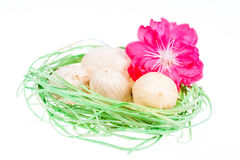 Green nest with eggs Stock Photo