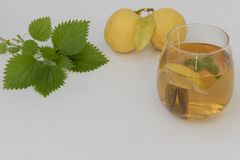 Green nettle tea with lemon. Next to the plant and fruit stock photo