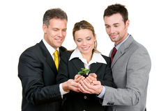 Green new growing business. Business team holding a fresh new plant on palm, symbol of green, new and growing business Royalty Free Stock Photos