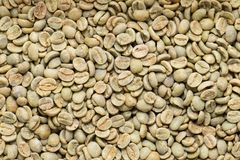 Arabica coffee beans. Green no roasted Arabica coffee beans texture, background Royalty Free Stock Photography