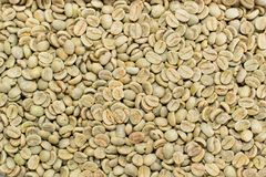 Arabica coffee beans. Green no roasted Arabica coffee beans texture, background Stock Photos