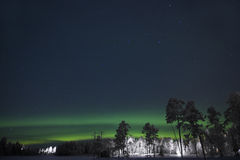 The green Northern Lights above the white pine trees Royalty Free Stock Photography