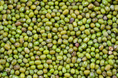 Green nut Royalty Free Stock Image