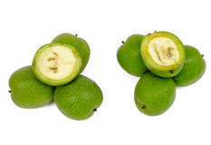 Green nut Stock Image