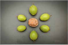 Green nuts arranged in a circle Stock Photo