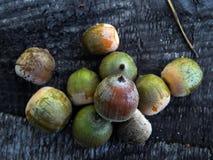 Green oak acorns on a wooden surface Stock Photos