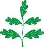 Green oak branch. Vector illustration Royalty Free Stock Photos