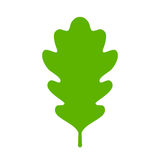 Green oak leaf icon Royalty Free Stock Images