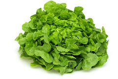 Green oak leaf lettuce Royalty Free Stock Photos