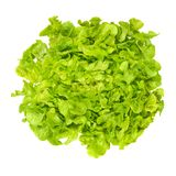 Green oak leaf lettuce from above over white Stock Photography