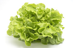 Green oak leaf lettuce isolated on white Royalty Free Stock Images