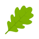 Green oak leaf vector illustration Stock Photo